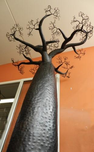 baobab,lycée,français,madagascar,endémique,allée,arbre